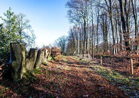Charme Hotel Oranjeoord | Luxe genieten in de bossen van Hoog Soeren 4-daags (2021)
