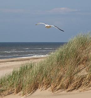 Golden Tulip Noordwijk Beach | Stijlvol genieten in prachtig Noordwijk 2-daags (  Zeezijde kamer)