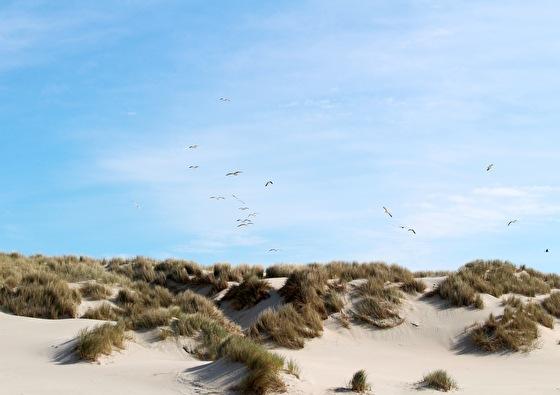 Paal 8 Hotel aan Zee | Superstunt naar Terschelling 3-daags